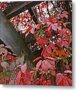Red Grape Leaves And Beams Metal Print