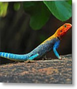 Red-headed Agama Metal Print