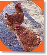 Red Hens 3 Metal Print