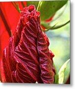 Red Hibiscus Torch Metal Print