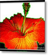 Red Hibiscus With Special Effects Metal Print