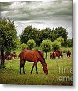 Red Horses Metal Print