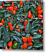 Red Hots Metal Print