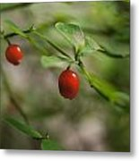 Red Huckleberry Metal Print by Angi Parks