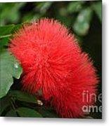 Red Koosh Ball Flowers Metal Print