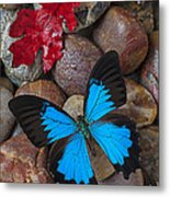 Red Leaf And Blue Butterfly Metal Print