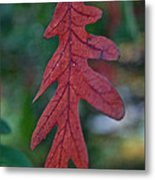 Red Leaf Hanging Metal Print