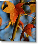 Red Leaves In Winter Sunset Metal Print