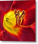 Red Lily Center 3 Metal Print