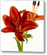 Red Lily Number One Square Metal Print