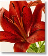 Red Lily Number Two Metal Print