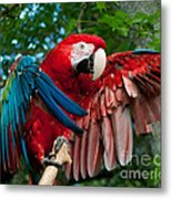Red Macaw Metal Print