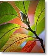 Red Magnolia Leaves With Bud Metal Print