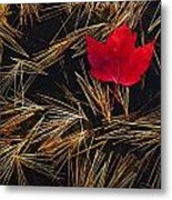 Red Maple Leaf On Pine Needles In Pool Metal Print by Mike Grandmailson