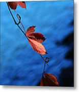 Red Maple Leaves Metal Print by Paul Ge