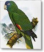 Red-necked Amazon Parrot Metal Print