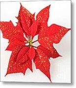 Red Poinsettia Flower Metal Print