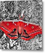 Red Polyphemus Metal Print