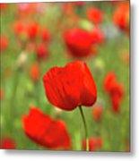 Red Poppies In Cornfield Metal Print