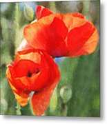 Red Poppies In Sunlight Metal Print