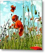 Red Poppy Flowers 03 Metal Print
