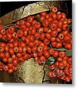 Red Pyracantha Berries Metal Print