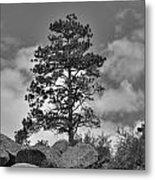 Red Rock Pine Metal Print