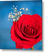 Red Rose And Baby Breath Metal Print