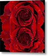 Red Rose Dew Metal Print
