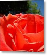 Red Rose Flower Bright Colorful Vivid Red Floral Rose Metal Print