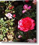 Red Rose In The Market Metal Print