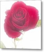 Red Rose Isolated On White Fog Metal Print by M K  Miller