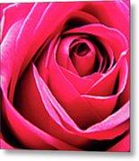 Red Rose Macro Metal Print