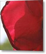 Red Rose Petal Metal Print