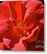 Red Rose Summer Metal Print