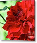 Red Ruby Dahlia Metal Print