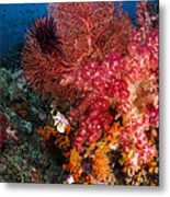 Red Sea Fan And Soft Coral In Raja Metal Print
