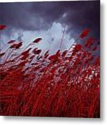 Red Sea Oats Blow In The Wind Metal Print