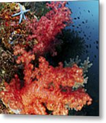 Red Soft Corals And Blue Leather Sea Metal Print