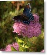 Red Spotted Purple Butterfly On Sedum Metal Print