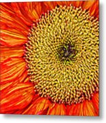 Red Sunflower Iv Metal Print