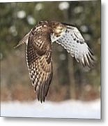 Red Tailed Take-off Metal Print