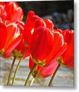 Red Tulip Flowers Art Prints Spring Florals Metal Print