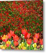 Red Tulip Flowers Metal Print