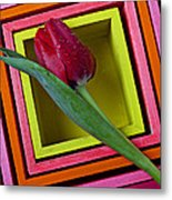 Red Tulip In Box Metal Print