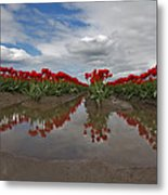 Red Tulip Reflections Metal Print