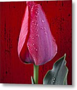 Red Tulip With Dew Metal Print
