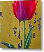 Red Tulip With Yellow Wall Metal Print