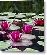 Red Water Lillies Metal Print