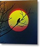 Red Winged Blackbird In The Sun Metal Print